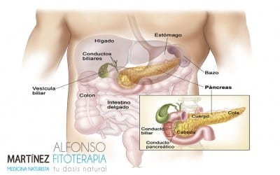 ¿Qué hace el páncreas?