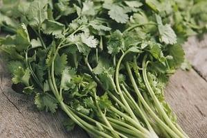 Propiedades del cilantro para las flatulencias