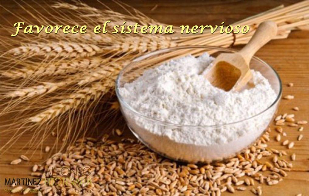 trigo para el sistema nervioso