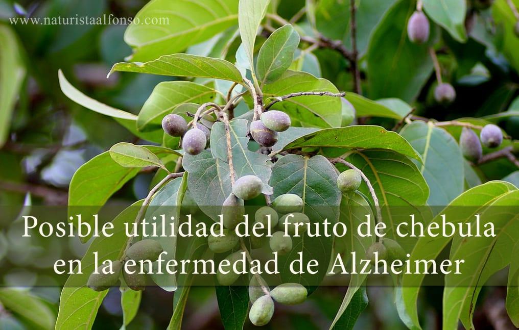 Fruto de chebula