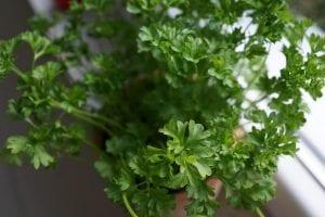 Plantas medicinales para insuficiencia renal