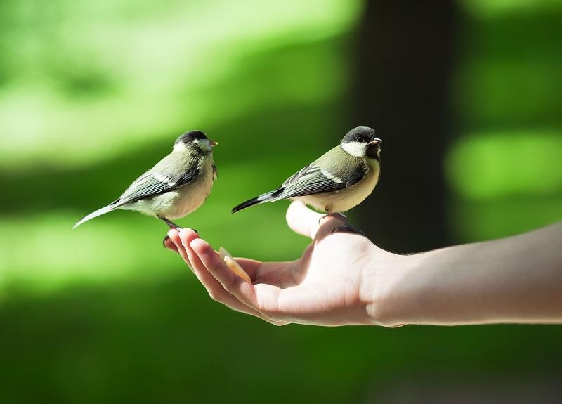 El vínculo con la naturaleza