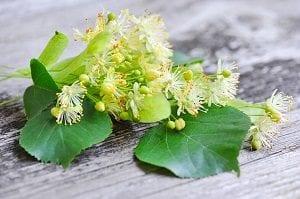 Propiedades y usos medicinales de la flor de Tilo