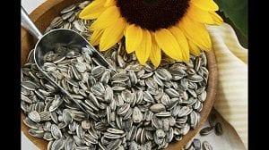 Semillas de girasol para la salud