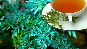 Beneficios medicinales de la Ruda