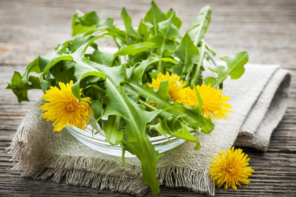 Plantas medicinales para infeccioines urinarias