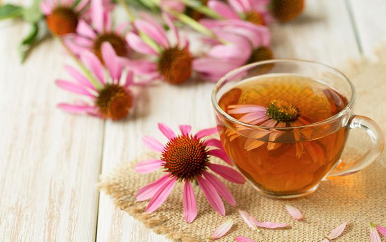 Plantas para reforzar el sistema inmune